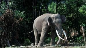 Elefante preso num poço é salvo por equipa de resgate