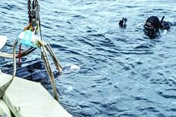 Grua ajudou a colocar o animal no mar