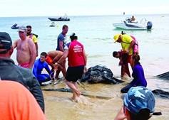 Resgate da tartaruga foi feito no dia 20 de junho, na meia praia, em lagos, depois de ter ficado presa em redes.