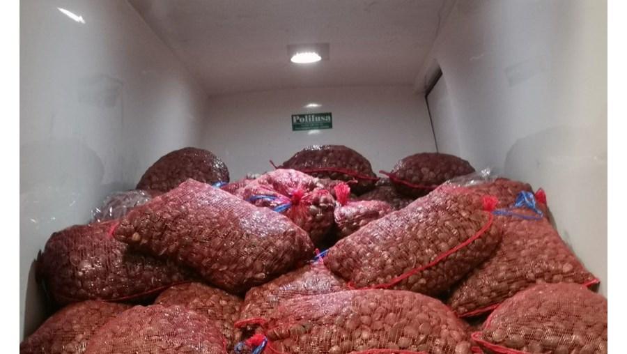 GNR apreende 5,4 toneladas de amêijoa japonesa em Valença