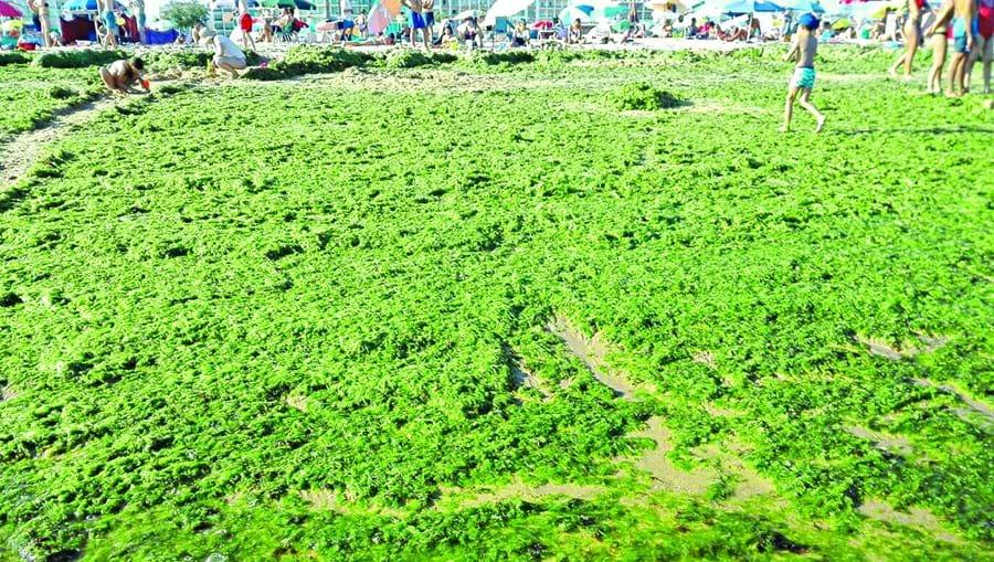 Manto verde criado por algas foi criado sobretudo na zona da rebentação nas praias entre Manta Rota e praia Verde