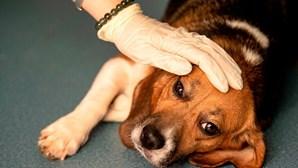 Doença não identificada mata dezenas de cães na Noruega