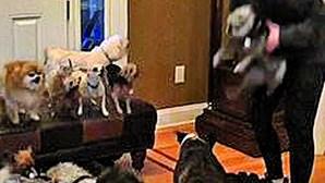 Casal faz retrato de família com 17 cães... mas os preparativos para a foto é que foram protagonistas