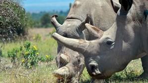 Três moçambicanos condenados a 35 anos por caça furtiva de rinoceronte na África do Sul