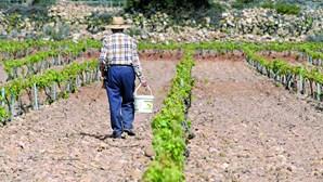 Menor portuguesa forçada a trabalhar em explorações agrícolas