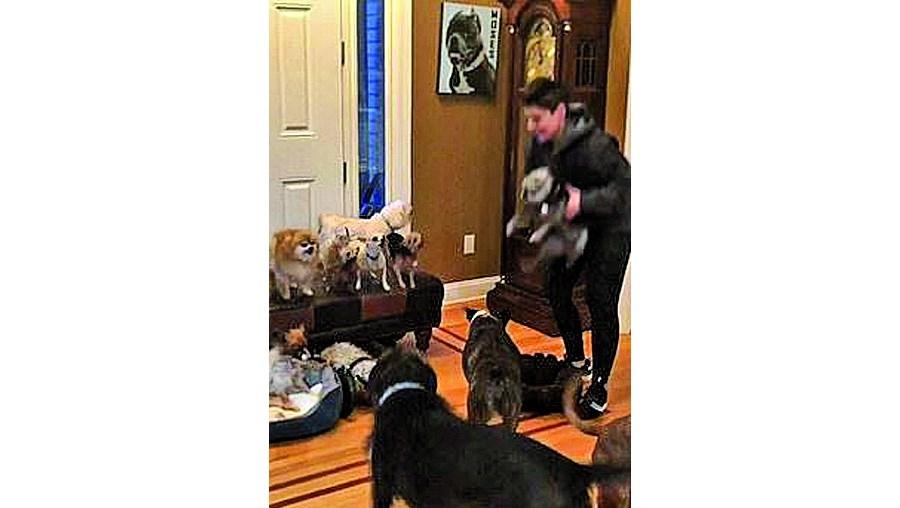 Casal faz retrato de família com 17 cães