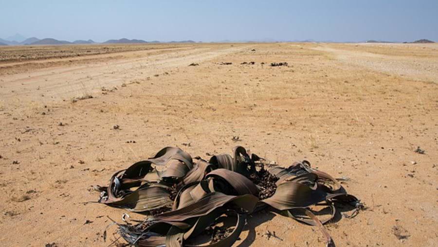 Zona sul de Angola devastada pela seca desde os finais de 2018