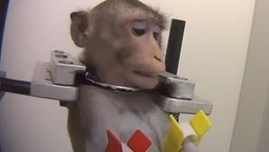 Laboratório que maltratava animais autorizado a permanecer aberto