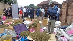 Polícia moçambicana queima mais de 500 quilogramas de drogas