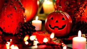 Gato seis anos desaparecido volta a casa a tempo do Halloween