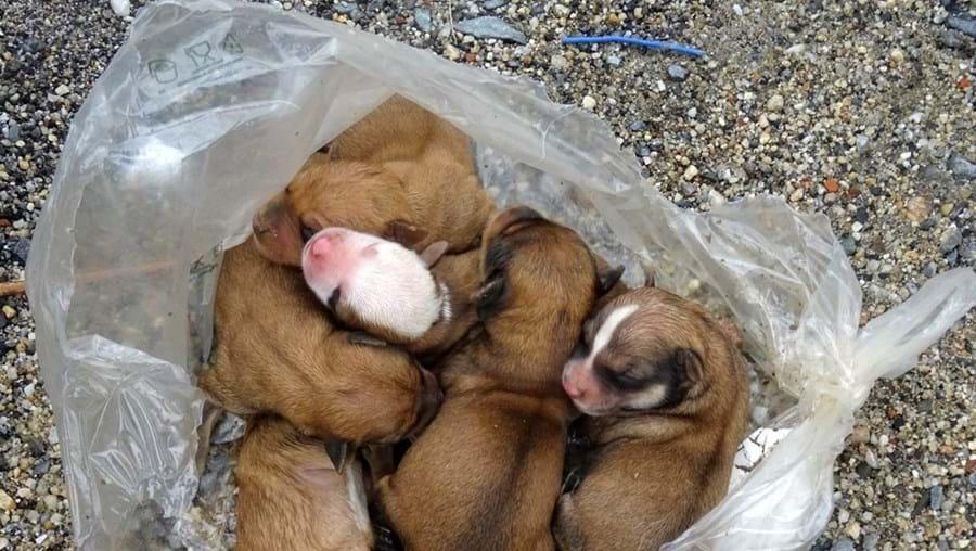 Cinco cães recém-nascidos abandonados num caixote do lixo