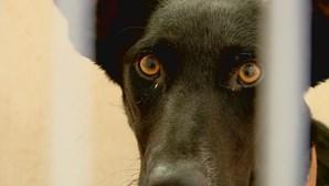 Mulher identificada por abandonar e mal tratar cão em Águeda