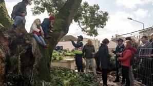 """""""A árvore ganhou este dia"""": Manifestantes impedem abate na Figueira da Foz após dez horas de protesto"""