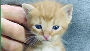 Mulher esconde 100 gatos em casa devoluta