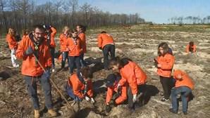 Voluntários aderem a iniciativa de reflorestação da mata nacional do urso em Leiria