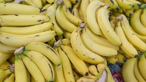 Contentor com bananas proveniente da América Latina escondia 375 quilos de cocaína