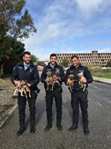 PSP resgata seis cães bebés abandonados numa vala em Carcavelos