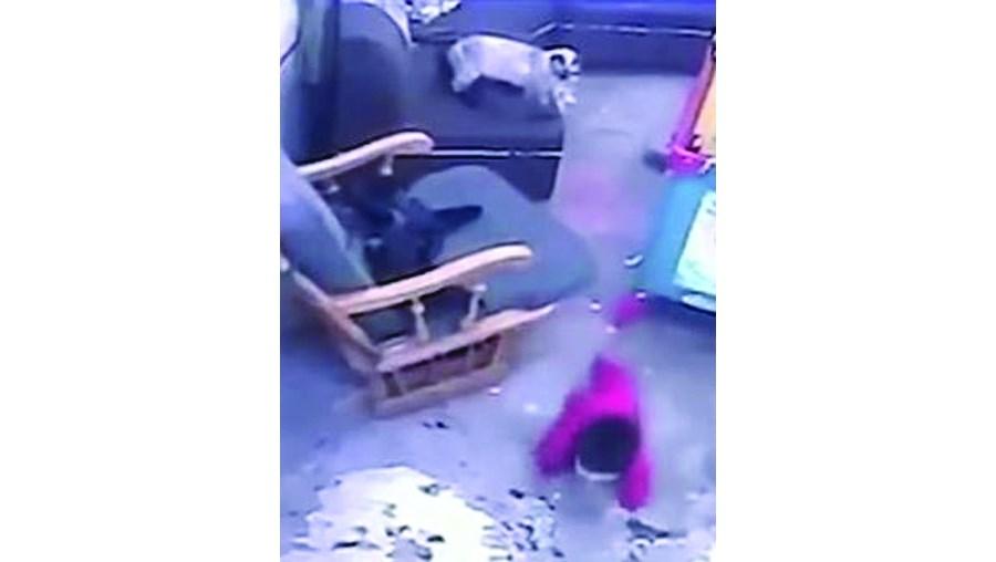 Gata salva bebé de cair das escadas