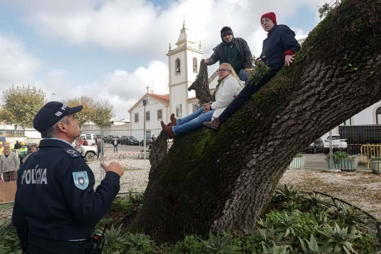 Manifestantes sobem a árvore para impedir abate na Figueira da Foz