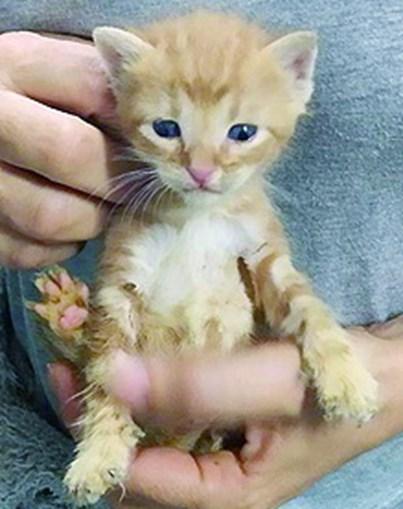 Mulher esconde 100 gatos em casa devoluta em Sintra