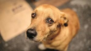 Partido de extrema-direita espanhol propõe abater cães que não são adotados