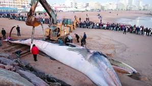 Baleia morta continua junto ao molhe da praia de Quarteira