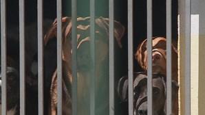 PSP salva mulher de ataque brutal de pitbull