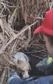 Bombeiros salvam oito cães de poço com água em Rio Maior