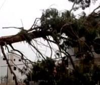 Árvore cai em cima de casa no Montijo