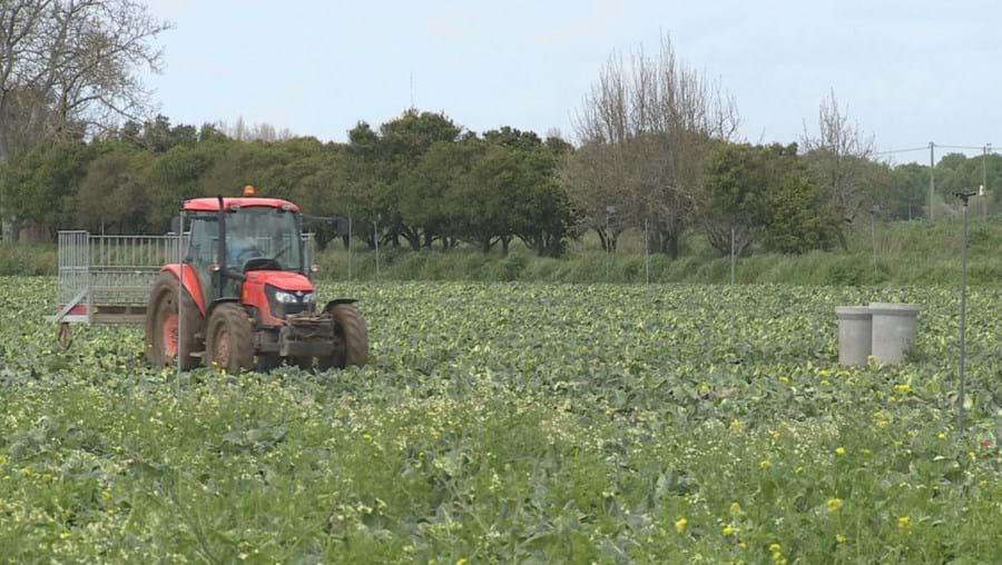 Modernização na agricultura com drones a combaterem a vespa-asiática