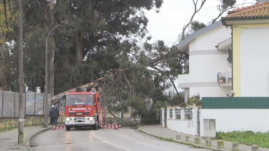 Queda de árvore danifica casa no Montijo