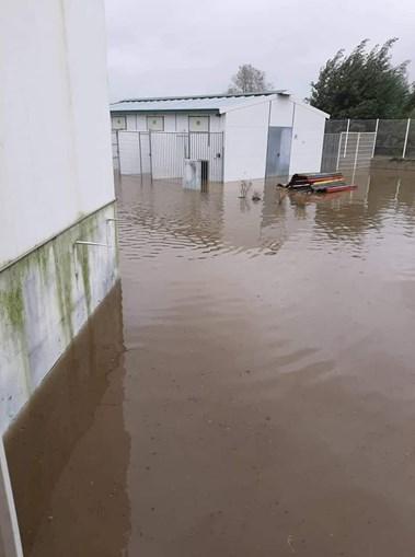 Mau tempo obriga a retirar 100 animais do canil de Coimbra. 60 foram acolhidos por famílias