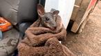 Famoso filma momento em que salva canguru bebé dos incêndios na Austrália. Veja as imagens