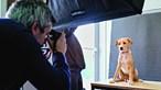Cães tornam-se modelos para promover adoção. Veja as imagens