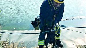 Bombeiros salvam dois cães em ETAR de Portimão