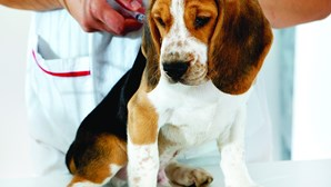 Contestada mudança de tutela dos animais de companhia entra hoje em vigor