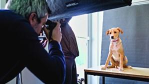 Cães tornam-se modelos para promover adoção