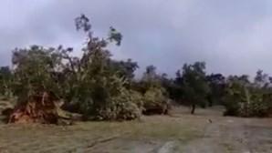 Tornado deixa rasto de destruição e arranca dezenas de árvores em Abrantes