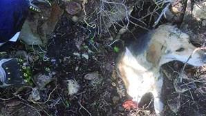 Bombeiros salvam cão que ficou soterrado em Tavira