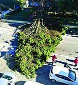 Queda de árvore cortou estrada em Lourosa