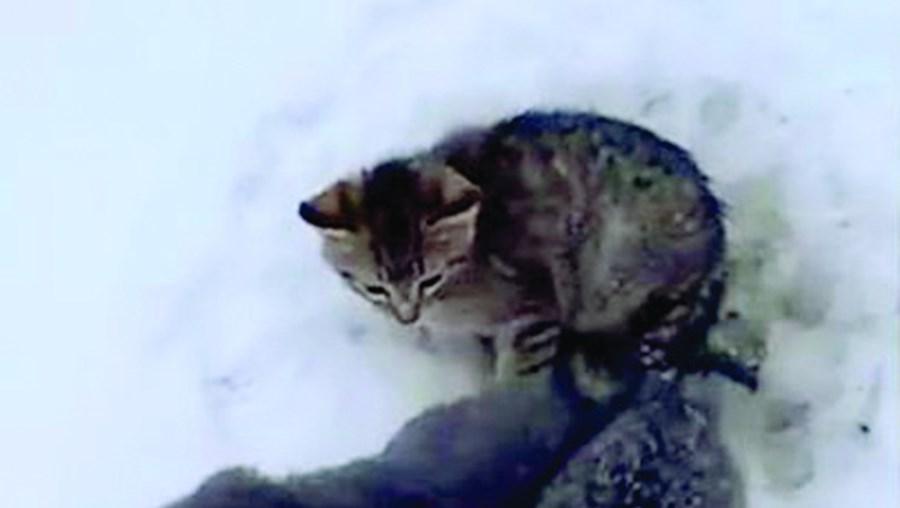 Homem resgata três gatos bebés presos na neve com café quente