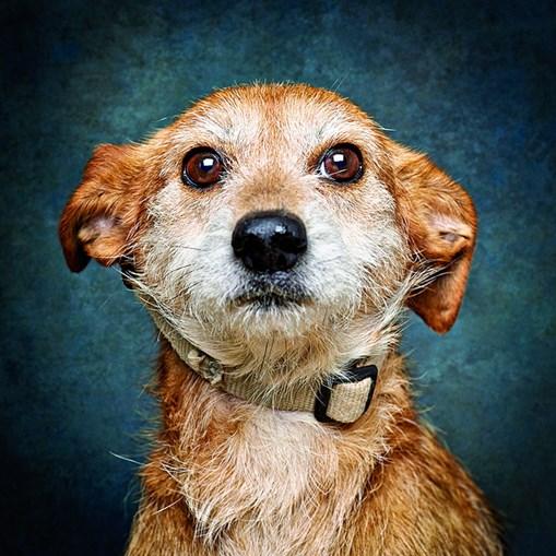 Cães modelos para promover adoção