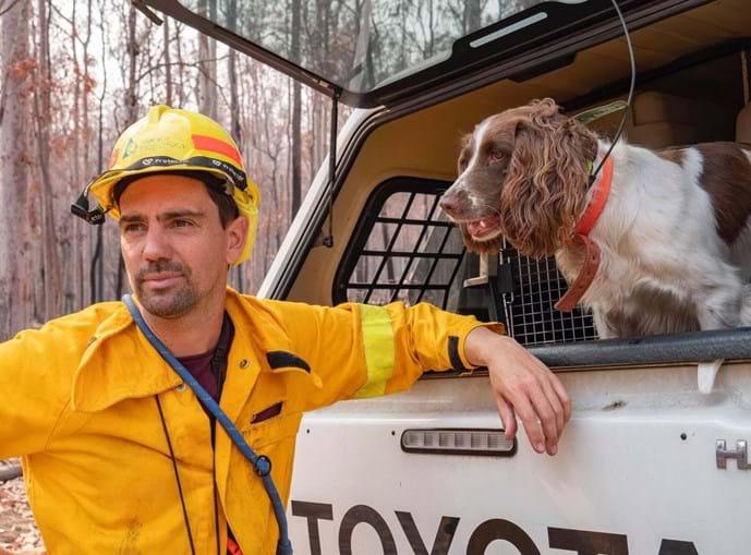 Conheça Taylor, a cadela que salvou oito coalas nos incêndios na Austrália