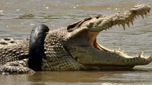 Há uma recompensa para o corajoso que conseguir retirar pneu de pescoço de crocodilo