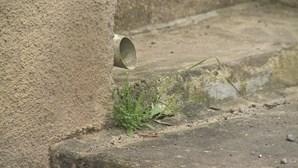 Município de Cantanhede reabilita rede de saneamento na freguesia da Tocha
