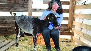Cabras e cães envenenados em pastagens em Olhão