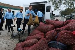 Megaoperação da GNR fiscaliza apanha de bivalves e imigrantes ilegais em praia do Samouco