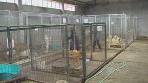 Abandonar animais à porta de abrigos vai dar pena de 6 meses de prisão