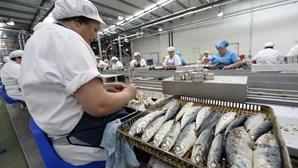 Fábrica de Conservas da Póvoa de Varzim aumenta produção e mantém todos trabalhadores