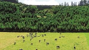 Agricultura não vive em modo de teletrabalho